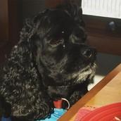 Mi perro, Frodo