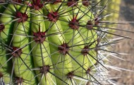 Simile: We both thought the prickly pear cactus looked like Ping-Pong paddle with whickers.