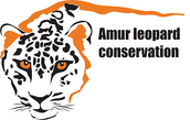 what is being done about the amur leopards endangerment