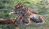 Mother stays with her cubs for four years.