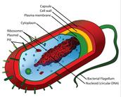 Prokarytoes