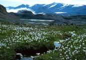 Vegitation in the Tundra