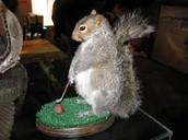 Squirrel Woods