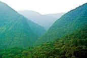 Rainforest in Bolivia