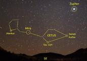 Constellation Cetus