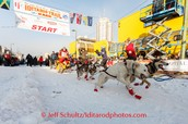 The dogs at the starting line