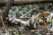 Destroying their habitats