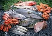 11,000 - lb. fresh fish.
