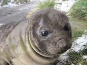 Names of elephant seals