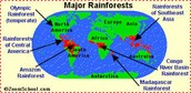 Where are tropical rain forest located?