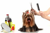 Want to pamper your pet?