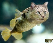 Adolescant Fishcat