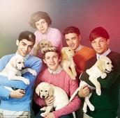 Puppy Direction