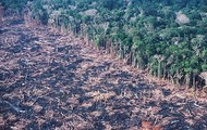 Rain forests are being destroyed