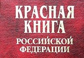 Растения и животные, занесённые в Красную книгу РФ