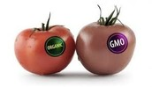 Is GMO A Good Thing Or A Bad Thing?