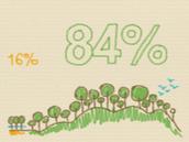 3. ¡Solo el 16% de los árboles usados para hacer papel son de cultivos, mientras que el otro 84% viene de bosques!