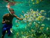 Come Snorkeling in Jamaica Today!