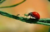 Organic Pests