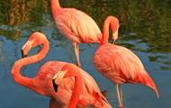 zoo flomingos