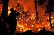 Summer 2015 California Wildfire