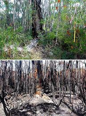 Our enviorment before and after a wildfire