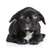 De angstfase bij een puppy