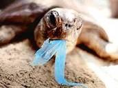 Eating plastic on land