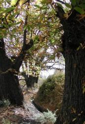 Flora De Bérchules