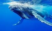 Beautiful Whale!