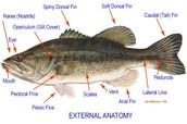 External Anatomy