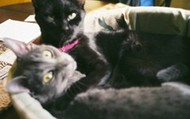 These two cats were rescued from the wild, and now are living a happy life.