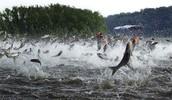 Danger flying fishes