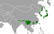 Asian Temperate Rainforests