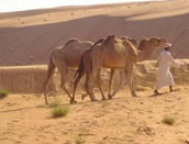 de kameel en de mens