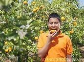 Kid enjoying a lovely Tangerine!
