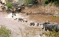 Migration safaris