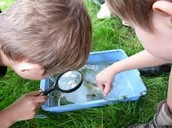 NATURE'S CHILD: Creatures of Redwing Pond – Fri. June 3, 10 am