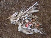 A Dead Seagull
