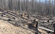 Torched Trees