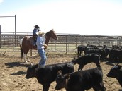 This is a pic of my dad helping me rope my first calf.