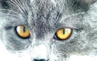 Cat with healthy eyes
