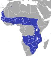 Savanna Region
