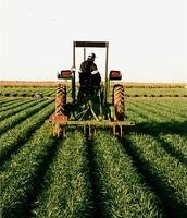 חקלאות באמריקה