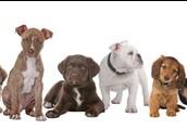 Cibo e accessori per animali domestici