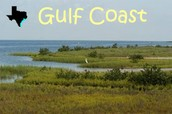 Why you wanted to visit the gulf coast prairies & marshes