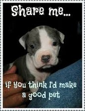 Claims that pit-bulls should be allowed.