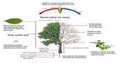 The SolarBotanic Tree