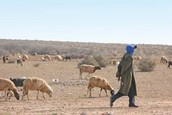 Who is Affected by Desertification