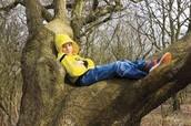 I used to climb trees